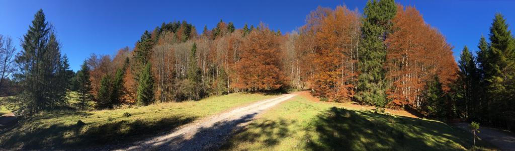 Herbstwald in der Jachenau