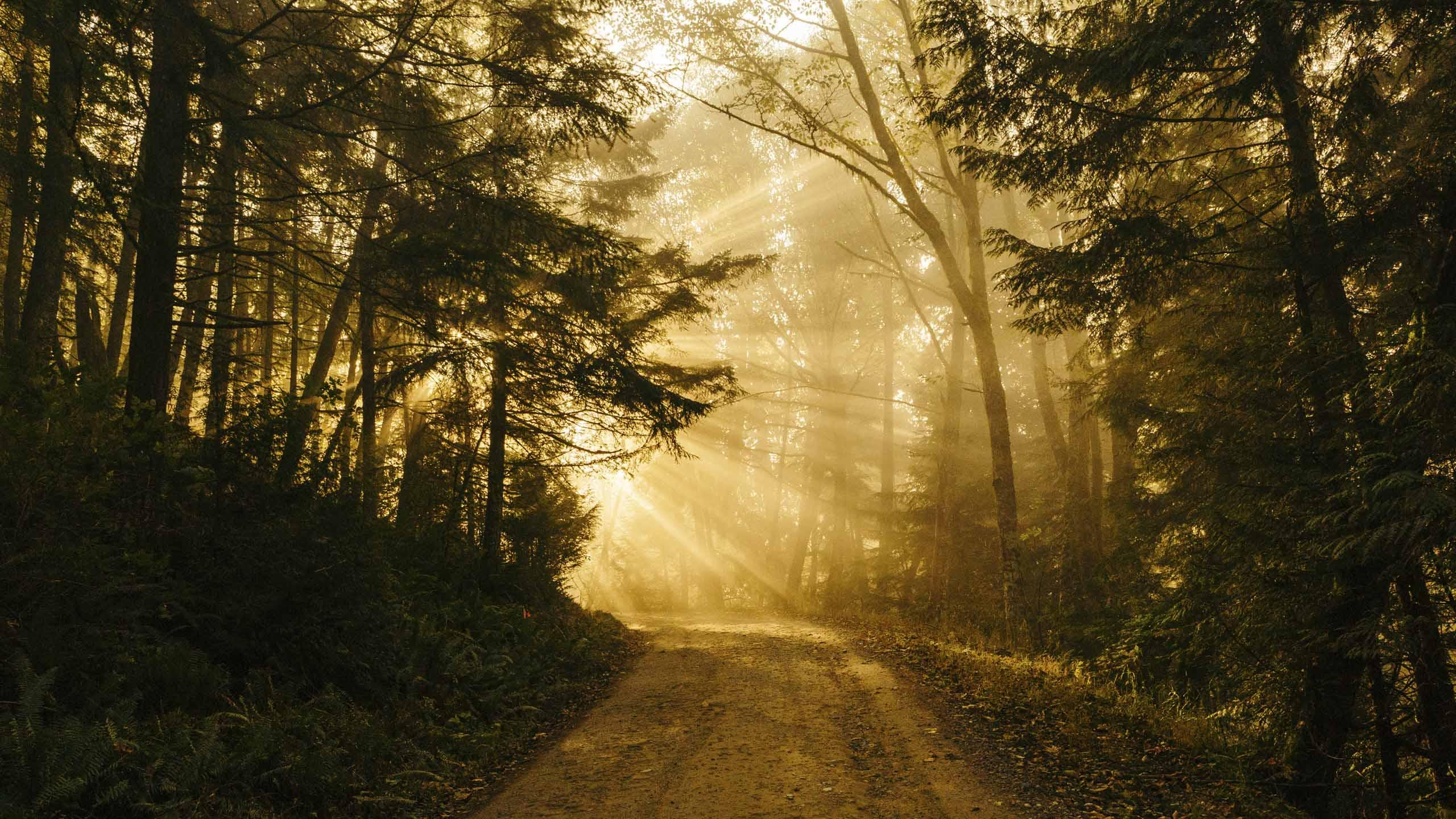 Magsicher Lichteinfall auf den Weg im Wald